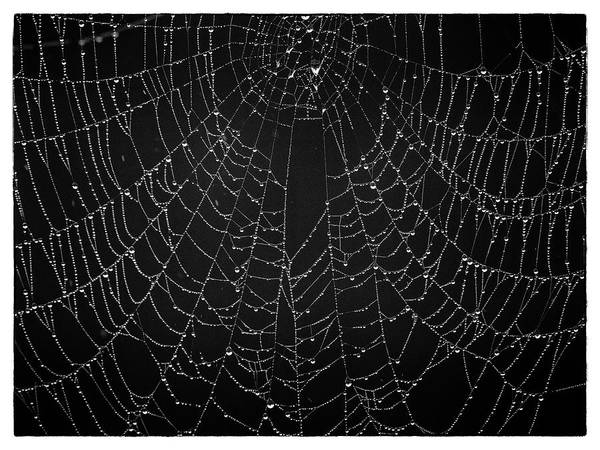 Photograph - A Web Of Silver Pearls by Gary Karlsen