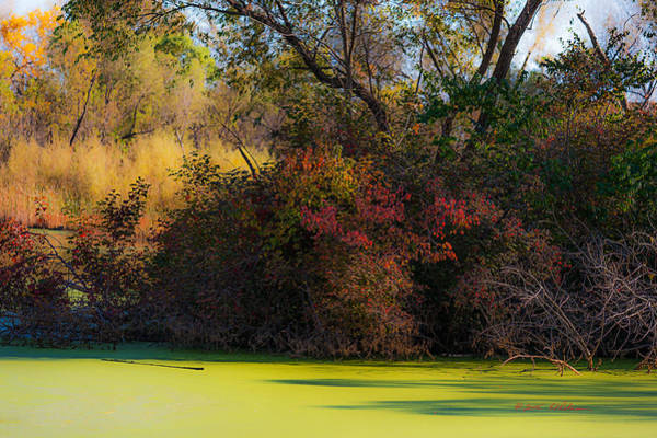 Photograph - A Wetland Display by Edward Peterson