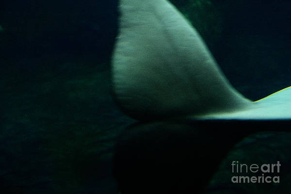 Photograph - A Whale's Tale by Linda Shafer
