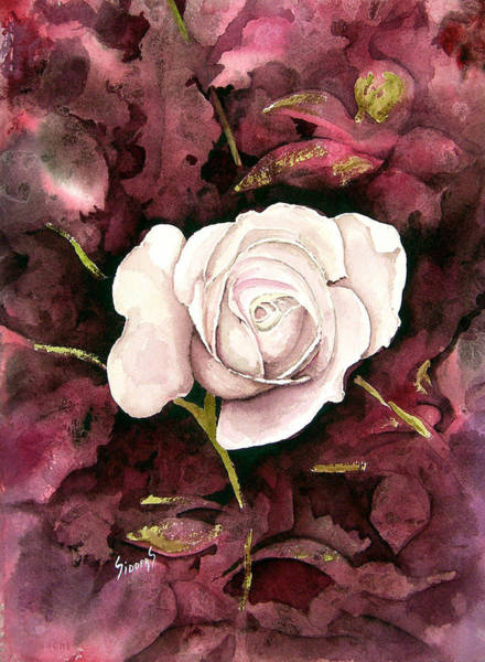 Painting - A White Rose by Sam Sidders