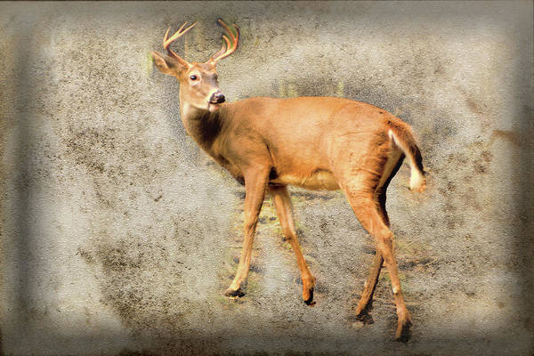 Digital Art - A Whitetailed Buck. by Rusty R Smith