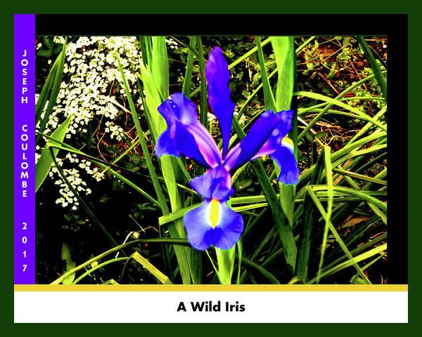 Digital Art - A Wild Iris by Joseph Coulombe