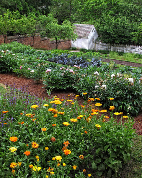 Colonial Williamsburg Photograph - A Williamsburg Garden by Dave Mills