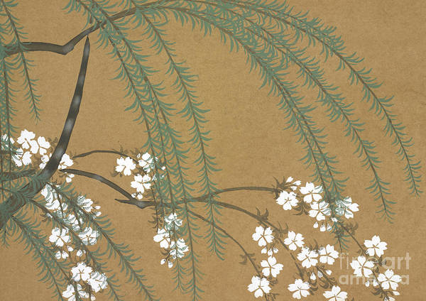 Cherry Tree Painting - A Willow And Cherry Blossoms by Kamisaka Sekka