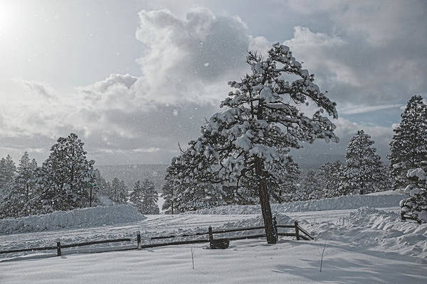 Photograph - A Winter Storm In Pagosa by Jason Coward