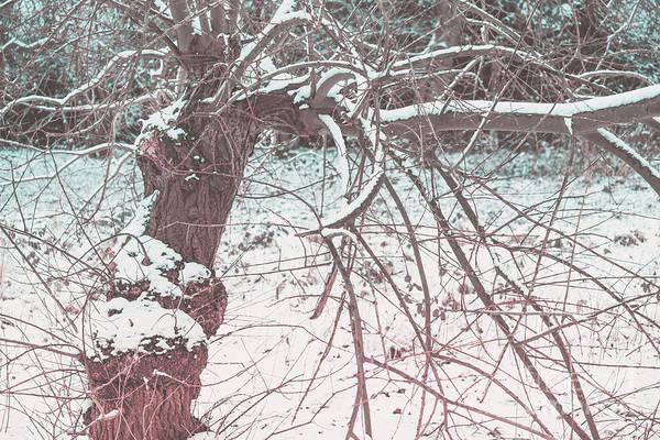 A Winter Tree Art Print