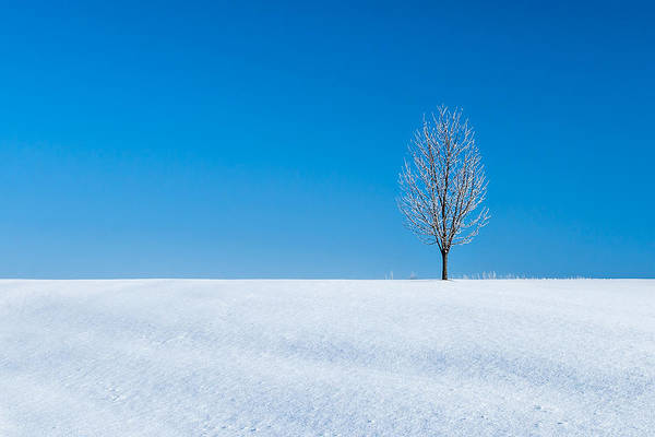 Photograph - A Winter's Landmark by Todd Klassy