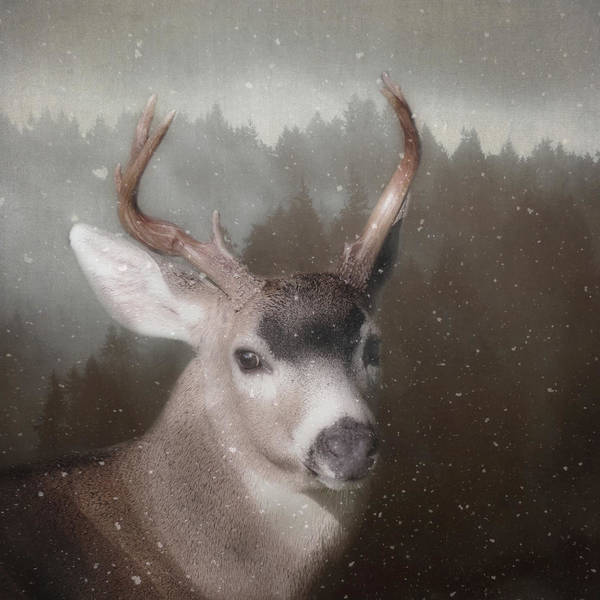 Art Print featuring the photograph A Winter's Night by Sally Banfill