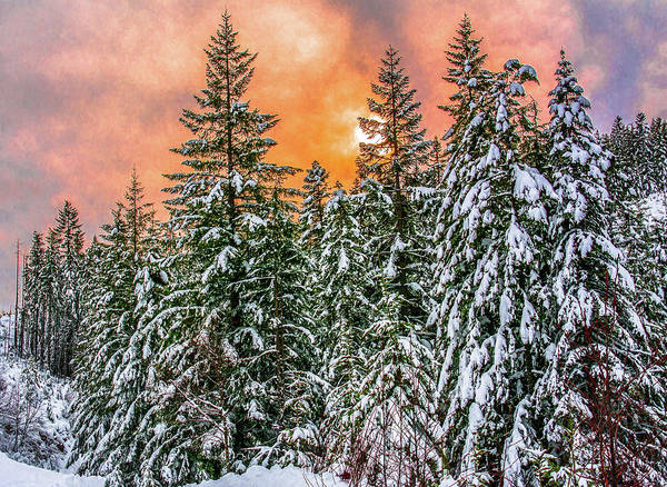 Photograph - A Winters Sky Set Ablaze by Jason Brooks