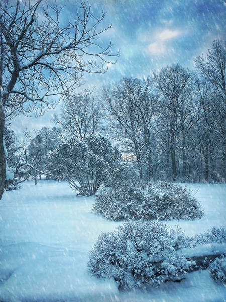 Photograph - A Winters Tale by Jill Love