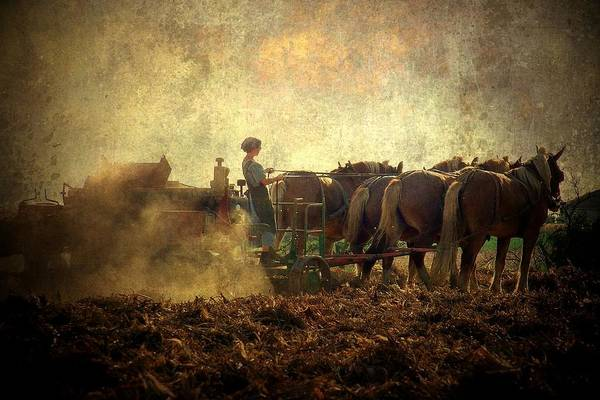 Plowing Photograph - A Woman's Work Is Never Done by Trish Tritz