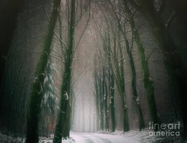 Photograph - A Woodland Fantasy by David Lichtneker