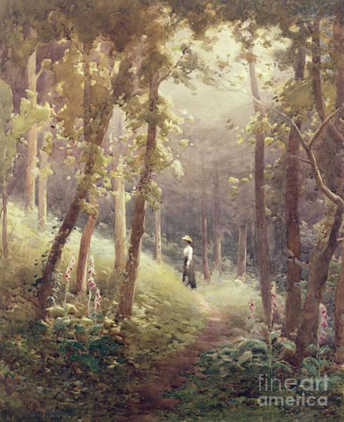 Foxglove Wall Art - Painting - A Woodland Glade by John Farquharson