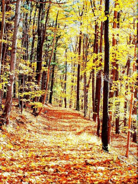 Photograph - A Yellow Wood by Joshua House