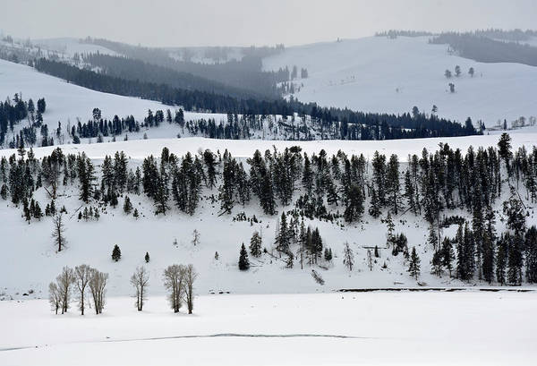 Photograph - A Yellowstone Landscape In The Lamar Valley by Bruce Gourley