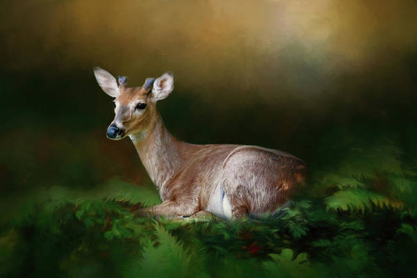 Wall Art - Photograph - A Young Buck by Lana Trussell