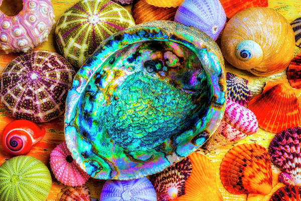 Wall Art - Photograph - Abalone Shell With Colorful Seashells by Garry Gay
