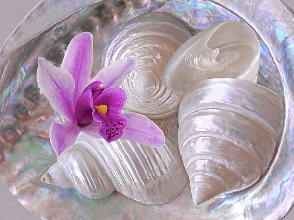 Photograph - Abalone With Pearl Shells And Purple Orchid by Gill Billington