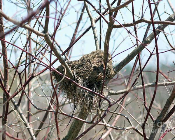 Empty Nest Wall Art - Photograph - Abandoned Bird Nest by Smilin Eyes  Treasures