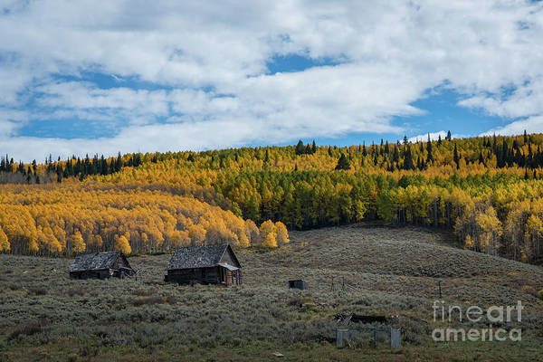 Wall Art - Photograph - Abandoned Cabin Along Ohio Pass Road by Michael Ver Sprill