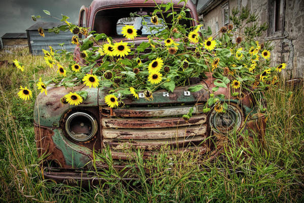 Photograph - Abandoned Old Ford Truck With Yellow Flowers In The Ghost Town By Okaton South Dakota by Randall Nyhof