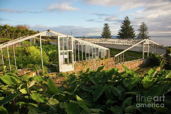 Wall Art - Photograph - Abandoned Pineapple Greenhouses by Gaspar Avila