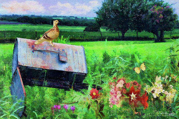 Photograph - Abandoned Rural Mailbox by Anna Louise