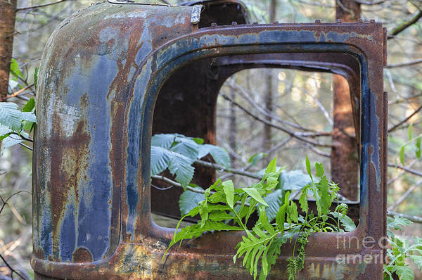 Photograph - Abandoned Rusted Car - New Hampshire Forest by Erin Paul Donovan