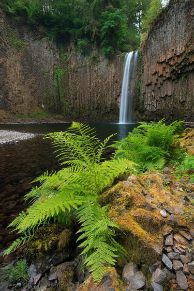 Wall Art - Photograph - Abiqua With Ferns by Patrick Campbell