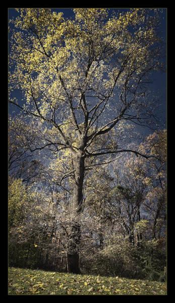 Arboretums Photograph - Aboretum Autumn by Robert Fawcett