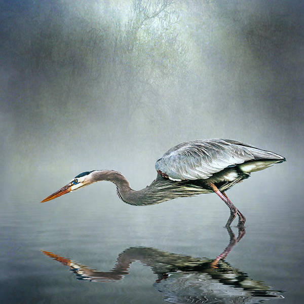 Bird Strike Wall Art - Photograph - About To Strike by Brian Tarr