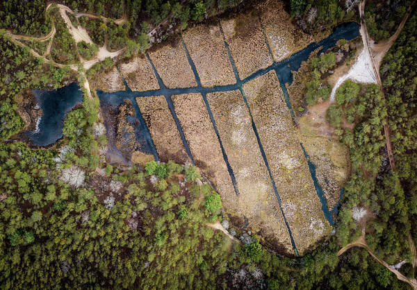 Cachalot Wall Art - Photograph - Above The Bogs by Dennis Wilkinson