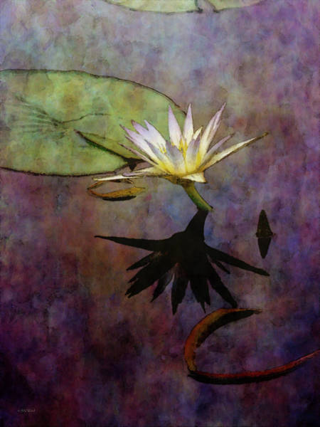 Photograph - Above The Deep 4141 Idp_2 by Steven Ward