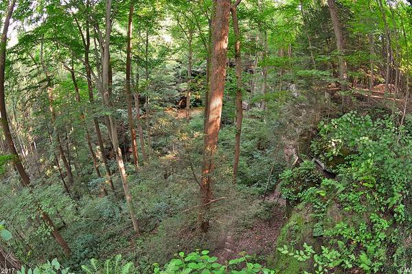 Photograph - Above The Forest  by Lisa Wooten