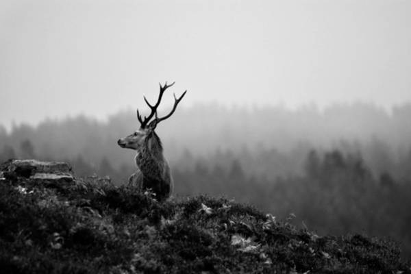 Photograph - Above The Mist by Gavin MacRae