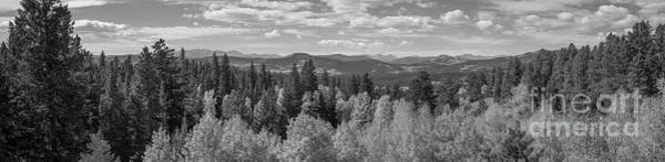 Photograph - Above The Tree Tops Bw by Michael Ver Sprill
