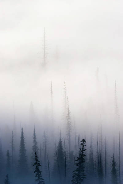 Fir Trees Photograph - Above Them All by Mike  Dawson