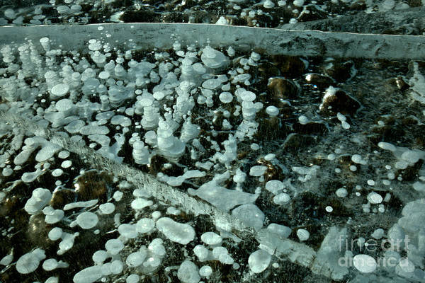Photograph - Abraham Bubbles In The Ice by Adam Jewell
