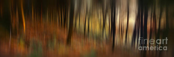 Wall Art - Photograph - Autumn Forest by Rod McLean