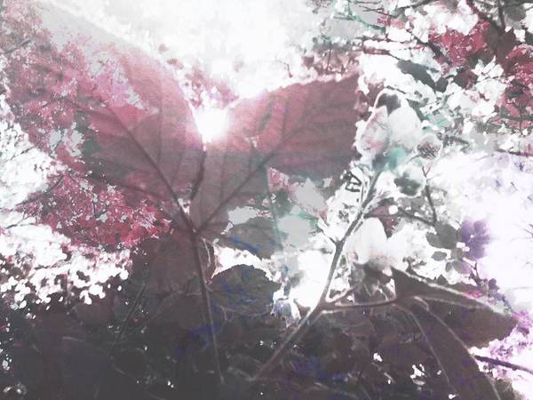 Photograph - Abstract Botanical Art Raspberry Leaf Sunset,  by Itsonlythemoon