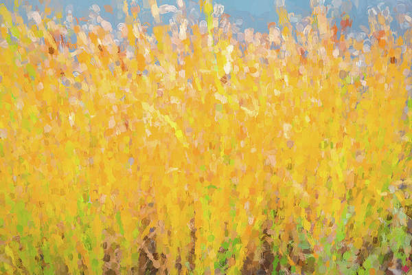 Photograph - Abstract Colorful Cattails Grasses Painting by James BO Insogna
