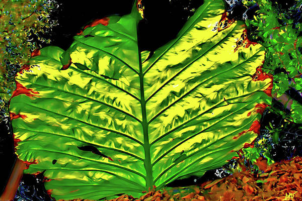 Photograph - Abstract Elephant Ear Plant by Gina O'Brien