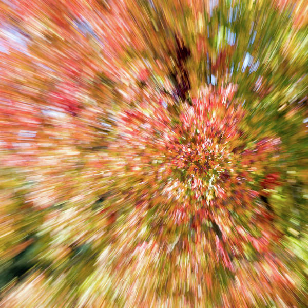 Wall Art - Photograph - Abstract Fall Leaves 3 by Rebecca Cozart