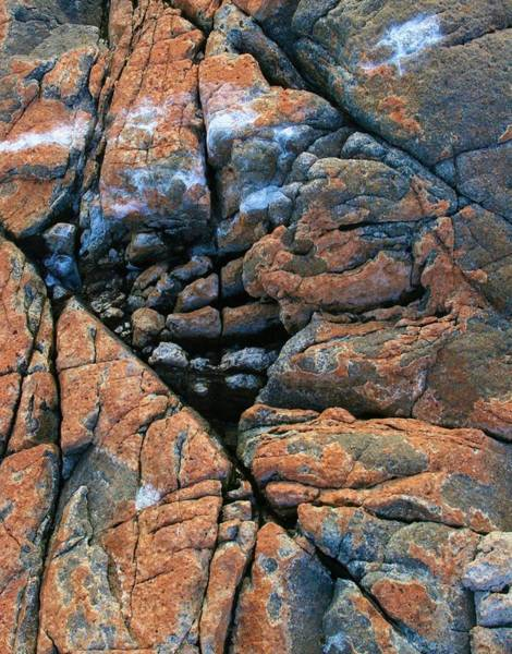 Photograph - Abstract Fissures And Cracks by Polly Castor