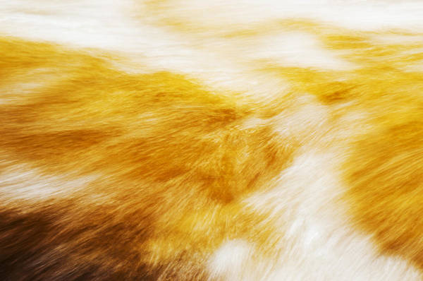 Aira Force Wall Art - Photograph - Abstract Flow Two by Paul Cullen