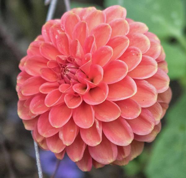 Hydrangea Photograph - Abstract Flower by Martin Newman