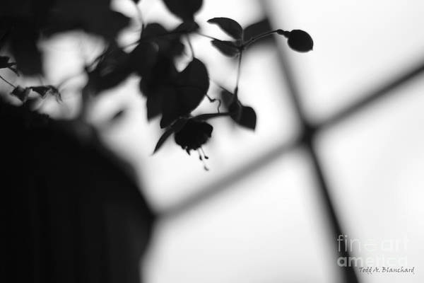 Photograph - Abstract Flowers by Todd Blanchard