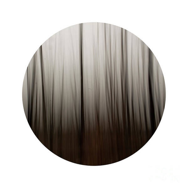 Wall Art - Photograph - Abstract Forest 3 by Priska Wettstein