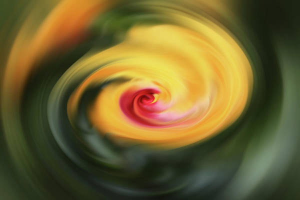 Photograph - Abstract From Hibiscus  by Cynthia Guinn