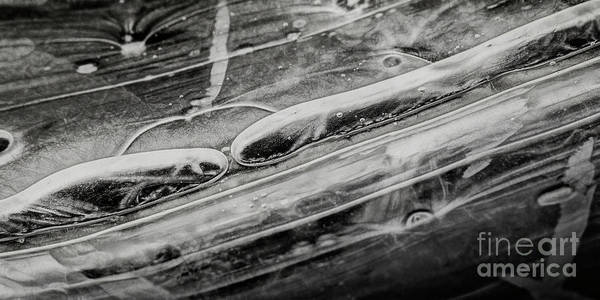 Photograph - Abstract Ice Patterns Xi by Brad Allen Fine Art